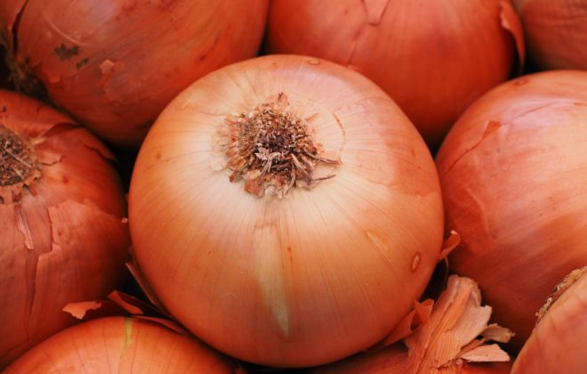 Four Keys to Onion Growing Success